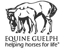 Equine Guelph: Helping Horses for Life
