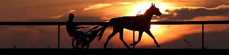 Silhouette of standardbred horse on track against a sunset in the background.