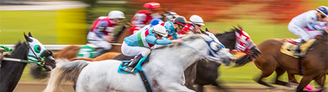 Thoroughbred horses with jockeys racing on a track.