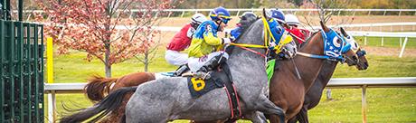 Quarter horses with jockeys leaving start gate.