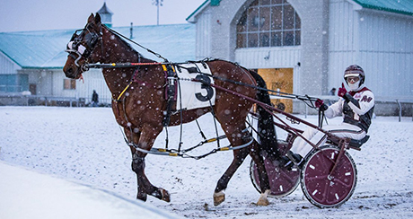 Standardbred horse with rider in on snow covered ground.