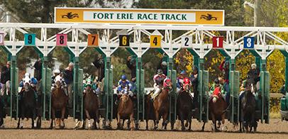 Race horses leaving gate a Fort Erie racetrack.