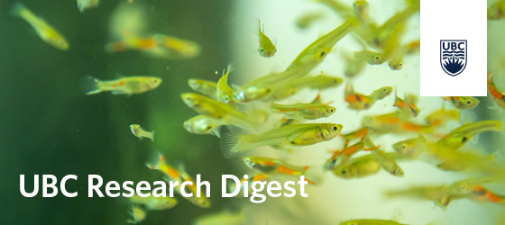 UBC Research Digest